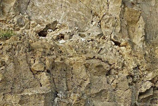 Kamuflajlı Afrika Baykuşu (13 Resim)