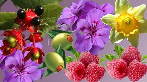 Bitki Kokularındaki Mucize Sır