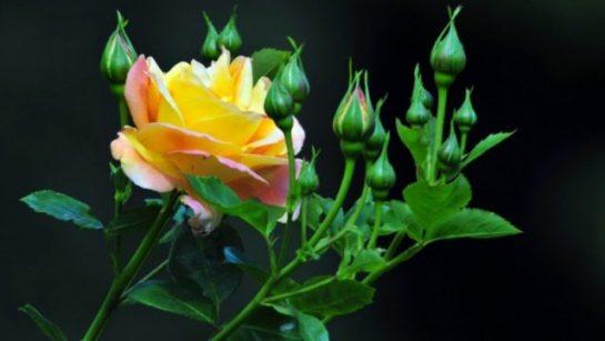 Çiçek Masa Üstü Resimler (21 Resim)