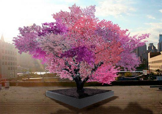 40 Meyveli Ağaç
