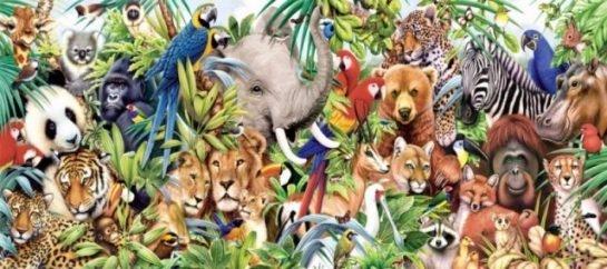 animals HAYVANLAR ALEMİ HAKKINDA İLGİNÇ BİLGİLER
