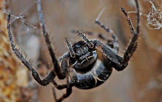 spider 564635 640