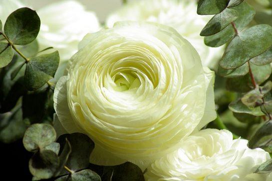 Çok Güzel Ve Kaliteli Çiçek Resimleri (tam 39 Resim)
