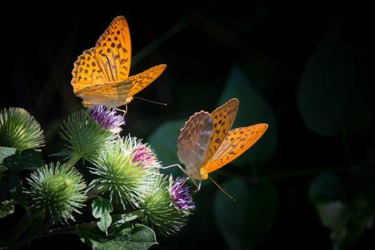 En Güzel Doğa ve Manzara Resimleri (40 Resim)