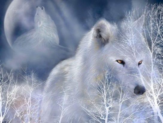 320659__white-wolf_p GÜZEL VE ANLAMLI SÖZLER