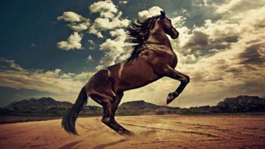 Çok Güzel At Resimleri (20 Resim)