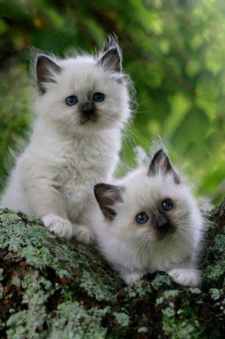 Güzel Hayvan Resimleri (30 Resim)
