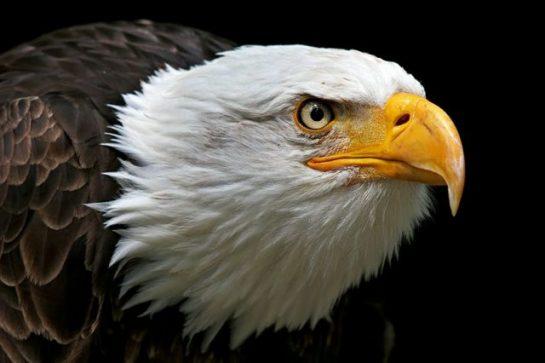 sozluk-yazarlarinin-favori-hayvanlari_41980 Güzel Hayvan Resimleri (30 Resim)