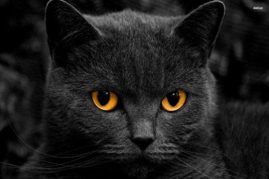 Kara Kedi ve Uğursuzluk