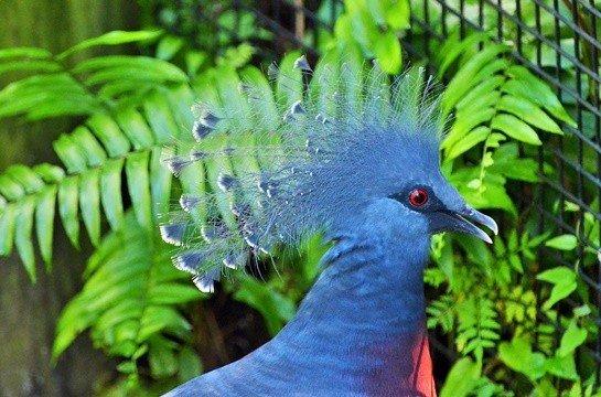 Orniloji Nedir? Ornitolog ve Ornitoloji Hakkında Bilgi